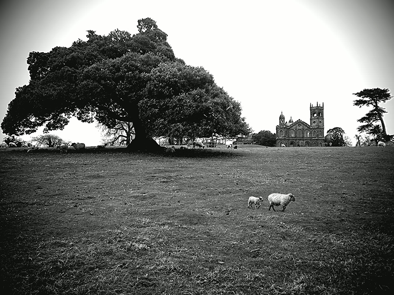 Camera-Boost-Leica-BW-sheep